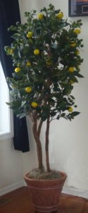 EF-1385 4' To 7' Custom Made Life Like Lemon Tree
