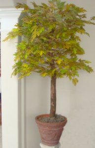 EF-1989 4' to 7' Rock Maple Tree - Green/Rust - FIRE RETARDANT