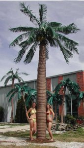 EF-2009 10' TO 20' Tall Outdoor Giant Royal Coconut  Palm Tree