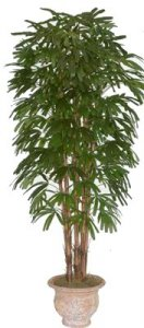 EF-1890 8 foot Raphis Palm Tree with 7 natural trunks and 1260 leaves