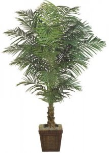 EF-2408 6' And 7' Fountain Palm