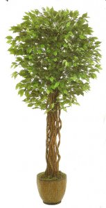 EF-8005 5.5' Outdoor UV Coated  Ficus Tree