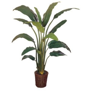 EF-2339 6 foot Travellers Palm: Potted in basket Shown