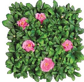 "EF-8512 Outdoor Artificial Pink Flowering Azalea Mat- 12"" Squares****6 PC MIN ORDER****"