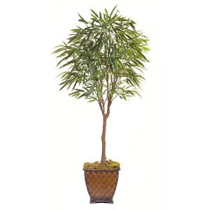 EF-5428 6' Weeping  Ficus Tree