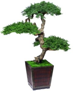 "EF-0048 4' Senshi Bonsai (meaning ""soldier"") includes three large Heads."