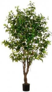 EF-LPF624-GR 6' Outdoor Ficus  Trees 1850 LVS (Price is for 2 Trees*)