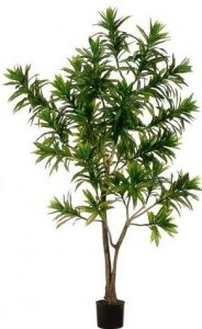 EF-LPD506-GR 6' Outdoor UV Rated  Dracaena Trees 950 lvs Per Tree(*Sold in a Set of 2 pc)