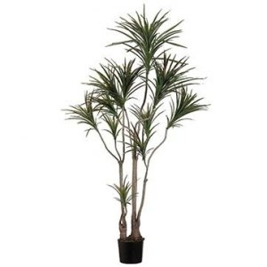 EF-516-GR  6' Outdoor Dracaena Marginata Tree w/418 Lvs. in Plastic Pot Green Burgundy