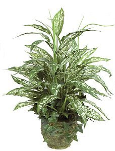 "P-84240 24"" x 20"" Mixed Aglaonema Bush with Plastic Grass - With Round  Pot"