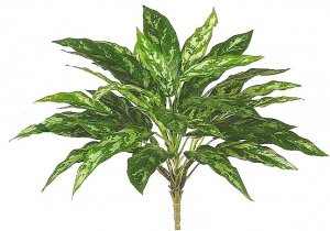 "EF-141 19"" Aglaonema Bush w/36 Lvs. Green"