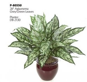 "P-80550 26"" Aglaonema Bush - 40 Grey/Green Leaves"