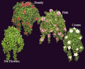 "EF-128 28"" Hanging Outdoor UV Rated Azalea Bush (3 Colors Beauty, Pink, or Cream)"