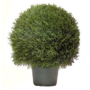 "EF-3339 30"" Pond Cypress Ball Topiary 22"" Wide Indoor/Outdoor"