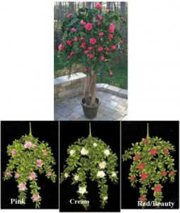 EF-700 Custom Made Polyblend Outdoor Flowering Azalea Tree Comes from 4 to 7 feet Made (Choose From 3 different colors Beauty, Cream, Pink)