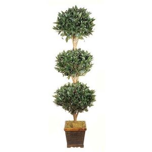 EF-1893  5' Sweet Bay Triple Ball Topiary Natural Wood 1925 Lvs