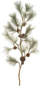 "48"" Frosted White Pine Spray with Pine Cones - 16 Long Green Tips"