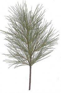 "C-0160 34"" PVC Wispy Long Needle Pine Branch (Sold in a Set of 6pc)"