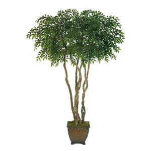 EF-4015 7.5' Smilax Ficus Tree 6 Natural Wood Trunks 3200 Lvs 4' Wide