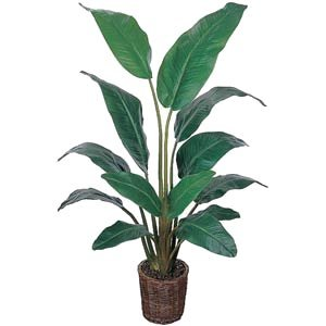 EF-2354 4.5' Travellers Palm Potted In Basket