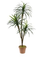 "EF-418 66"" Yucca x3 w/118 Lvs. & Coconut Bark (Price is for a 2 pc set)"