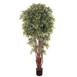 EF-1846 6' Ruscus Ficus Tree 4,956 Lvs Natural Trunk