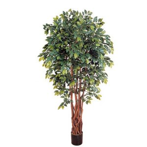 EF-1847 6' Sakaki Ficus Tree 2,205 Lvs Natural Trunk