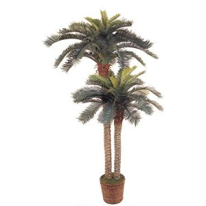 "EF-2578 6' & 4' Sago Palm w/80 Lvs in 10"" Basket"