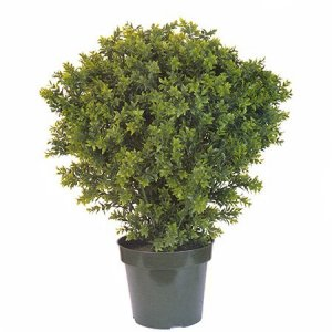 "EF-3301 38"" Basil Leaf Topiary W/1083 Lvs Indoor/Outdoor"