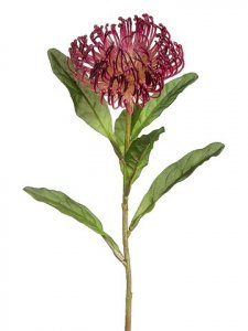"EF-752 26"" Pincushion Protea Spray  Burgundy (Sold Per Dz Set)"