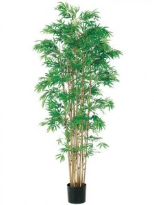 EF-052 	6' Japanese Bamboo Tree x15 w/3360 Lvs. in Pot Two Tone Green (Sold in a 2 pc set)