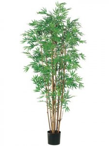EF-051 	5' Japanese Bamboo Tree x12 w/2400 Lvs. in Pot Two Tone Green (Sold in a 2 PC Set)