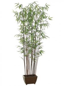 EF-728 	6' Bamboo Wall Tree x19 w/1276 Lvs. in Wood Container Shown Green (Sold in A 2 PC Set)