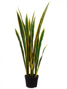 "EF-S501 44"" Sansevieria Plant in Plastic Pot Yellow (Sold as a 2 pc Set)"
