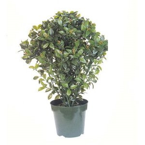 "EF-3302   30""  Bay Leaf Topiary W/1530 LVS Indoor/Outdoor"