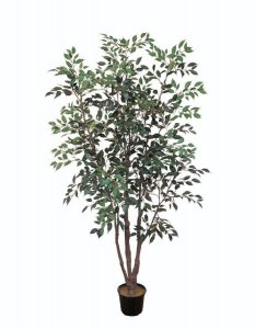 EF-4798 6' Ficus Tree 1563 leaves Green