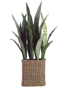 "EF-344 32"" Sansevieria Plant in Seagrass Basket Two Tone Green (Price is for a 2 pc set)"