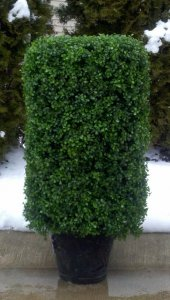"EF-6500 27"" Tall 17"" Wide 17"" Deep Outdoor Boxwood Hedge"