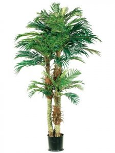 EF-801  6' 4' 2' Phoenix Palm Tree in Round Pot Green (Price is for a 2pc set)