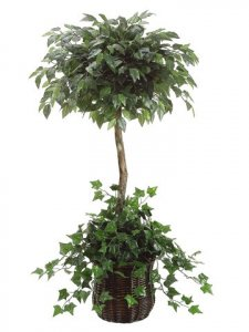 EF-4090  5' Ficus Topiary w/Ivy in Willow Basket