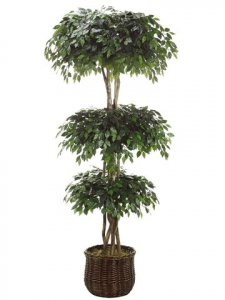 EF-4094  8' Ficus Triple Ball Topiary in Willow Basket