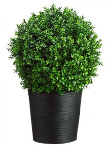 "EF-7663  30""Hx16""Wx16""L Boxwood Topiary in Bamboo Container Green Indoor/Outdoor"