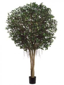 EF-4365  9' Giant Ficus Retusa Tree Natural Wood Trunks in Pot Two Tone Green