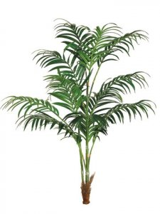 EF-668   8' Kentia Palm w/308 Lvs