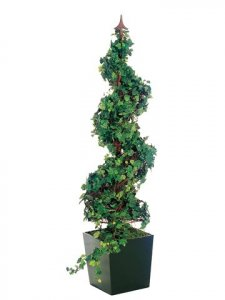 EF-425  4.5'  Spiral-Shaped Curly Ivy in Wooden Box