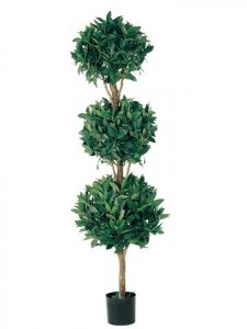 EF-315  	5' Triple Ball Sweet Bay Topiary in Pot