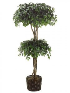 EF-4092   	7' Ficus Double Ball Topiary in Willow Basket