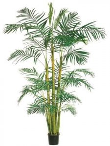 EF-35  9' Areca Palm Tree x3 in Round Pot Green (Price is for 2 Whole Palm Tree's)