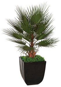 A-110100 5' Plastic Washingtonia Palm Tree - Fire Retardant