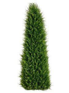 EF-224 4' Outdoor Canadian Cypress Triangular Topiary in Pot Green Indoor/Outdoor (Price is for a 2pc set)